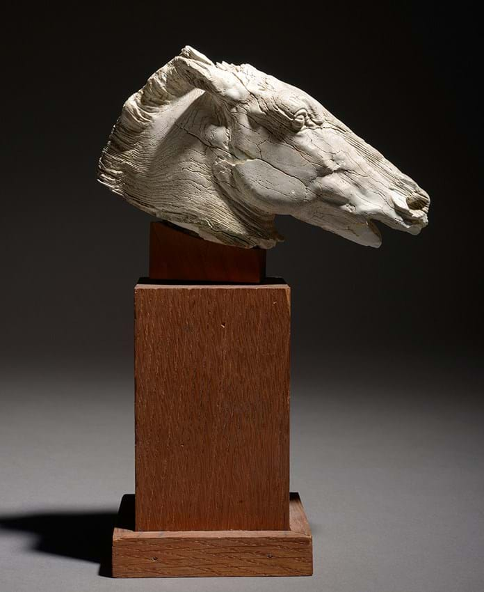 Ancient Greek carved ivory horse's head