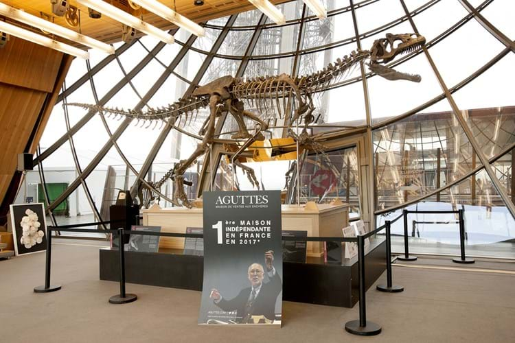 Dinosaur skeleton at Aguttes auction